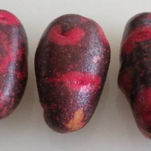 北海道ジャガイモ天国 一番美味しいのは熟成インカのめざめだな&石狩鍋記念日
