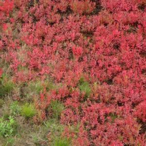 当別町ふくろう湖の紅葉は早かった 白鳥の渡りにそば処福住、いとうジンギスカン