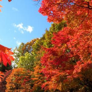 南区 紅桜公園の紅葉が美しい 紅櫻珈琲でリトルスプーンのカレーとキューバサンドを食す