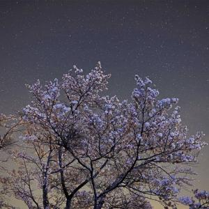奥多摩 桜と星