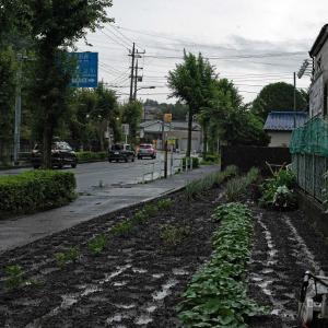 都羽村市(雨の吉野街道