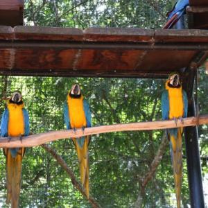 ブラジル中の鳥が集まるバードパークへ寄り道(後編) in ブラジル