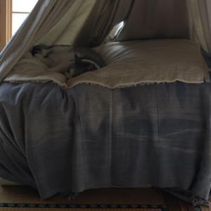 家の中で簡易テント? 安心して昼寝するエイジ