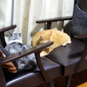 のっけ弁当ー7/7:アジの干物とふて寝する猫