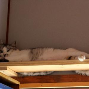 猫は家の中で一番心地よい場所を知っている