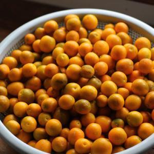 家庭菜園の金柑の残りをすべて収穫し終えました。