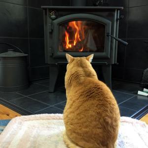 猫と炎、薪ストーブの前で佇む猫のいる暮らし