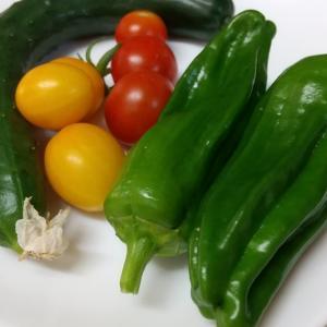 家庭菜園でダイエット♪