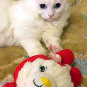 「白猫の日」と引き寄せの話し