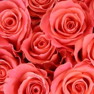 ★良縁を引き寄せるお部屋③「桃花位」を活用する《ラブ風水のすすめ》