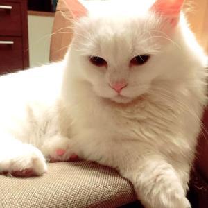 愛猫レオン、2歳になりました♥ (ΦωΦ)