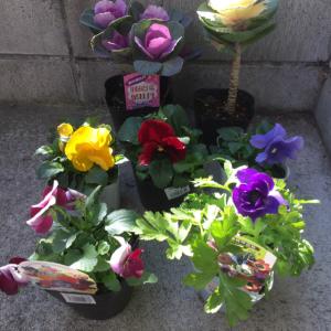 また少しお花を植えました&ブログのお引越し状況☆