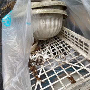 庭の不要物とハチの巣撤去