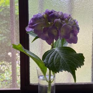 6月6日は紫陽花のおまじない トイレの神様