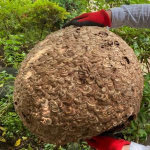 ハチの巣をやっと撤去しました