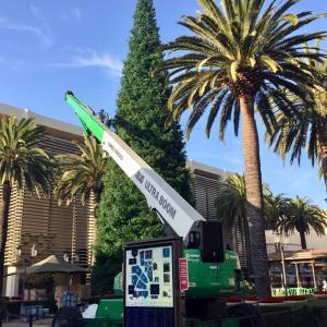 カリフォルニアのクリスマスツリー