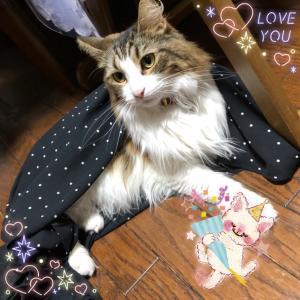 9月生まれさんの恋愛運Ⅳ