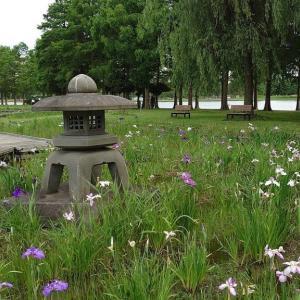 梅雨の合間に 県立三郷公園