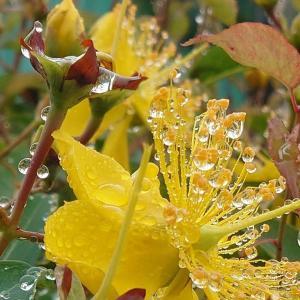 「雨の精」