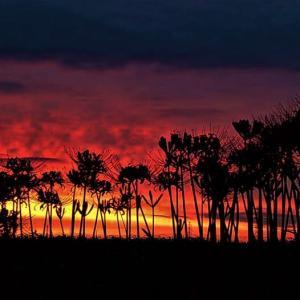 彼岸花と夕日
