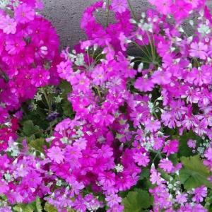 花は・花は・花は