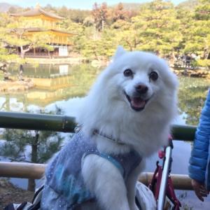 思い出日記 2017年3月 ぴぃちゃんが行く!京都旅2日目