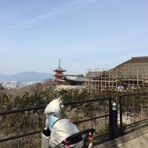 思い出日記 2017年3月 ぴぃちゃんが行く!京都旅最終日