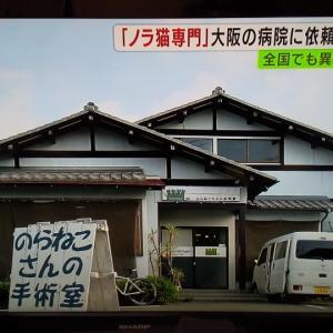 """""""ノラ猫手術の病院に依頼殺到!手術総数は3万匹以上"""""""