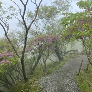 塔ノ岳~鍋割山 シロヤシオとトウゴクミツバツツジとヤマツツジを見に行く 2021.5.23