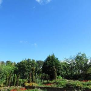 胡桃の実 サルスベリの花 山田池公園