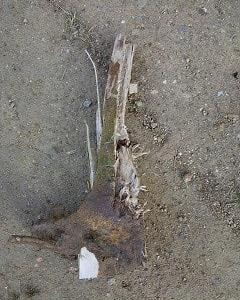 くろがねモチの木 斧を買いました!