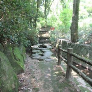 大阪府営山田池公園 水カンナの花 鉄分不足で足がつる