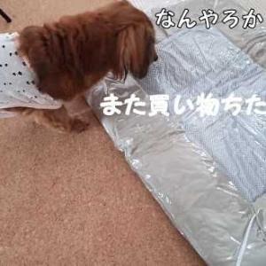 スペシャルな旅で夏用ベッド決定!