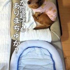 最後の寝床