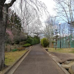 白石城の桜でお花見2019
