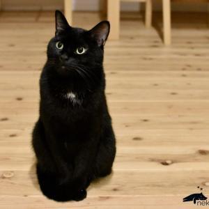 猫 ハゲ 検査結果