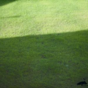 芝生 おすすめ 肥料 土