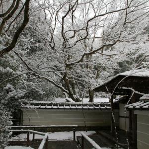雪の高桐院