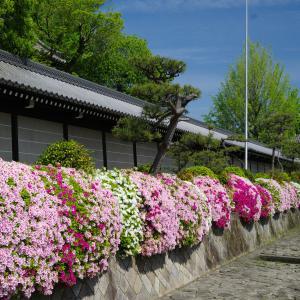 つつじ咲く西本願寺