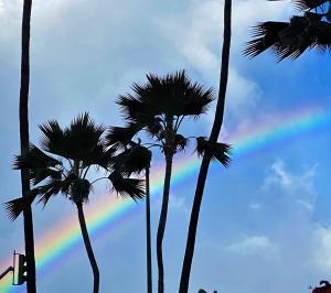 昨日の虹とにこにこパン