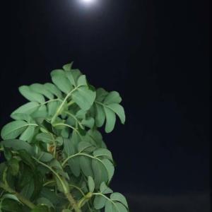 ダフィーの月