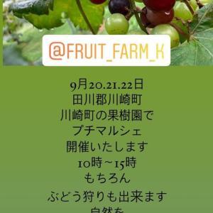 川崎町の果樹園プチマルシェ ぶどう編