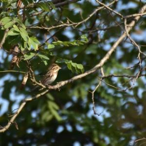 河川敷で出会った鳥たち・・・