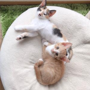 猫家族が増えまして
