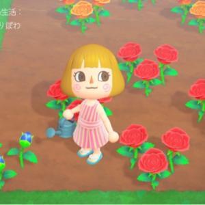 〈あつ森〉青いバラの咲かせ方
