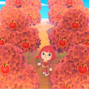 〈あつ森〉紅葉もみじとキノコと松ぼっくり