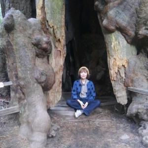 森林浴で心身浄化〜ミュアウッズ国定公園