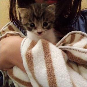 保護ネコの『こんぶちゃん♂』元気に育っています。