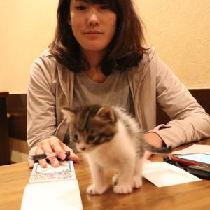 保護ネコの『こんぶちゃん♂』元気に育っています!