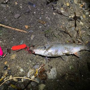 10/21 2020 鮭釣り ⑯ 【日本海】